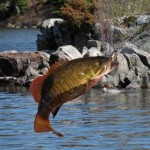 smallmouth-bass-3