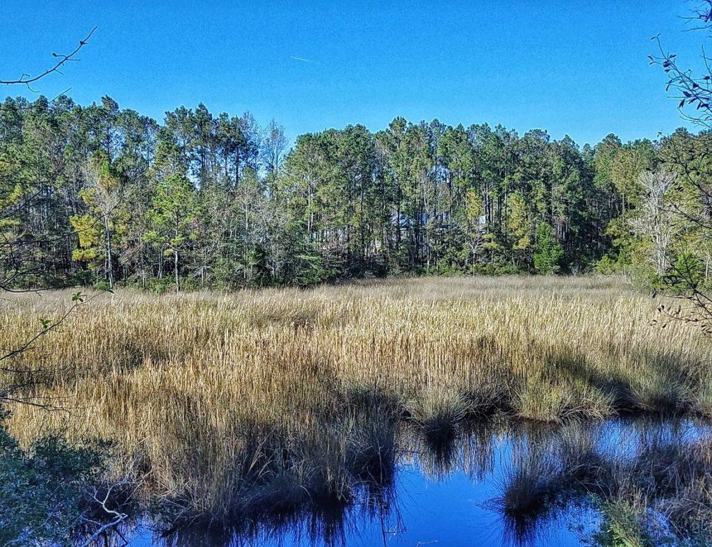 marsh view homesite 202