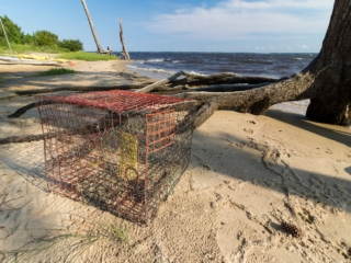 a crab trap on the beach with exposed tree roots and the neuse river behind it