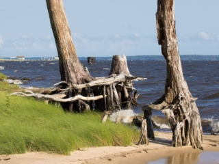 trees with exposed roots on the river beach