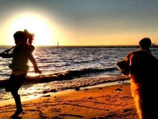 kids and dog playing on river beach at sunset