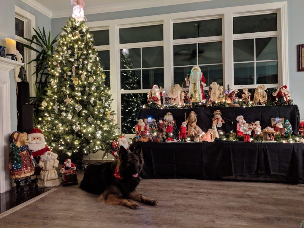 The MacMahons dog Majesty enjoying Christmas at AP.