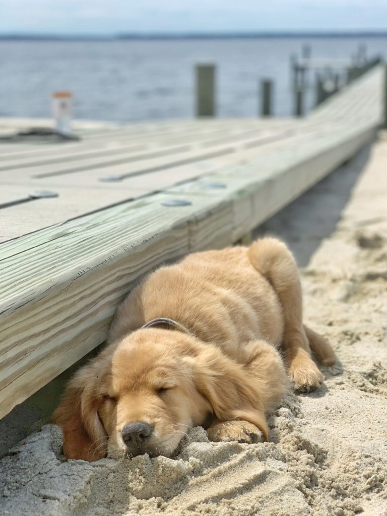 tired puppy takes a nap on the beach