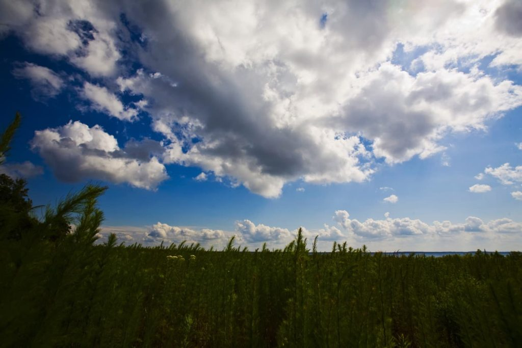 field of grass with cloudy blue skies overhead