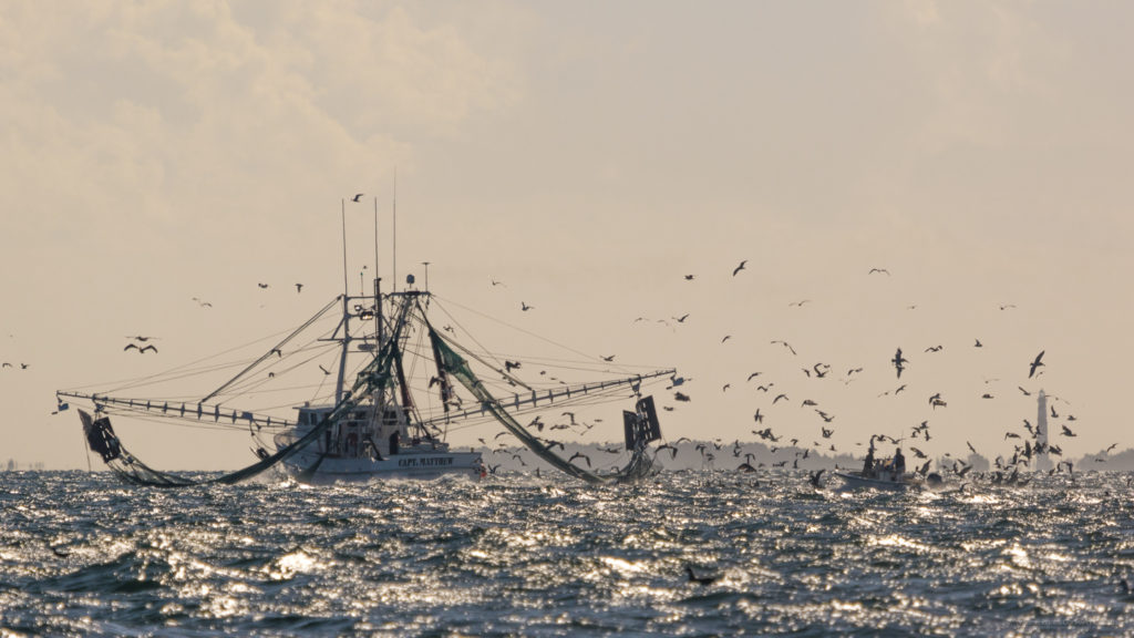 Sport fisherman fishing for False Albacore behind a shrimp trawler.