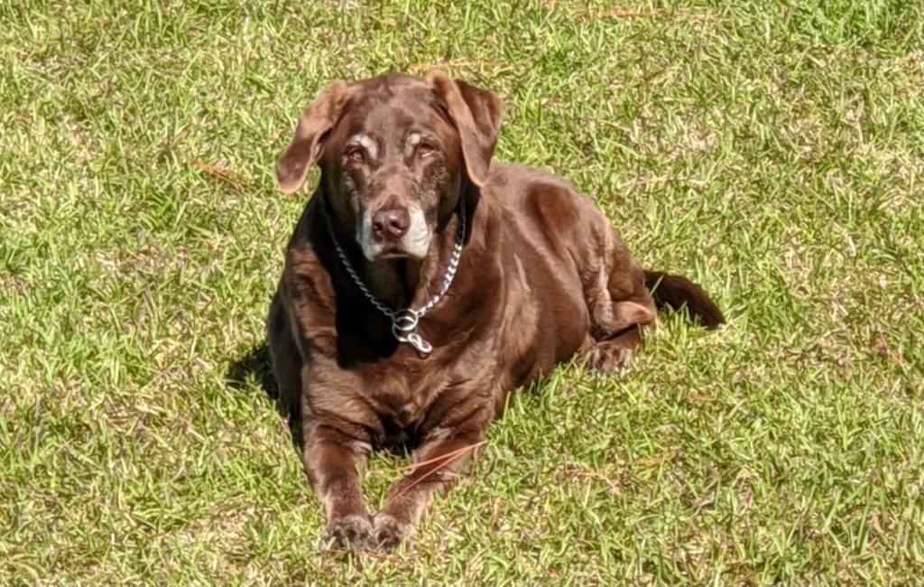 pet of the month - Riskie