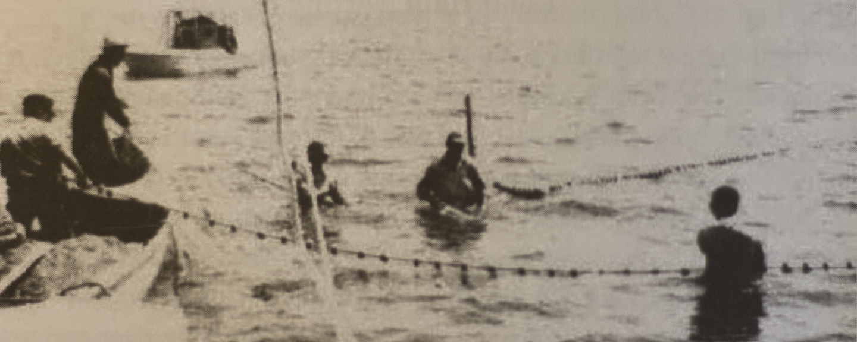 Historic photograph of long haul netting around Pamlico County.