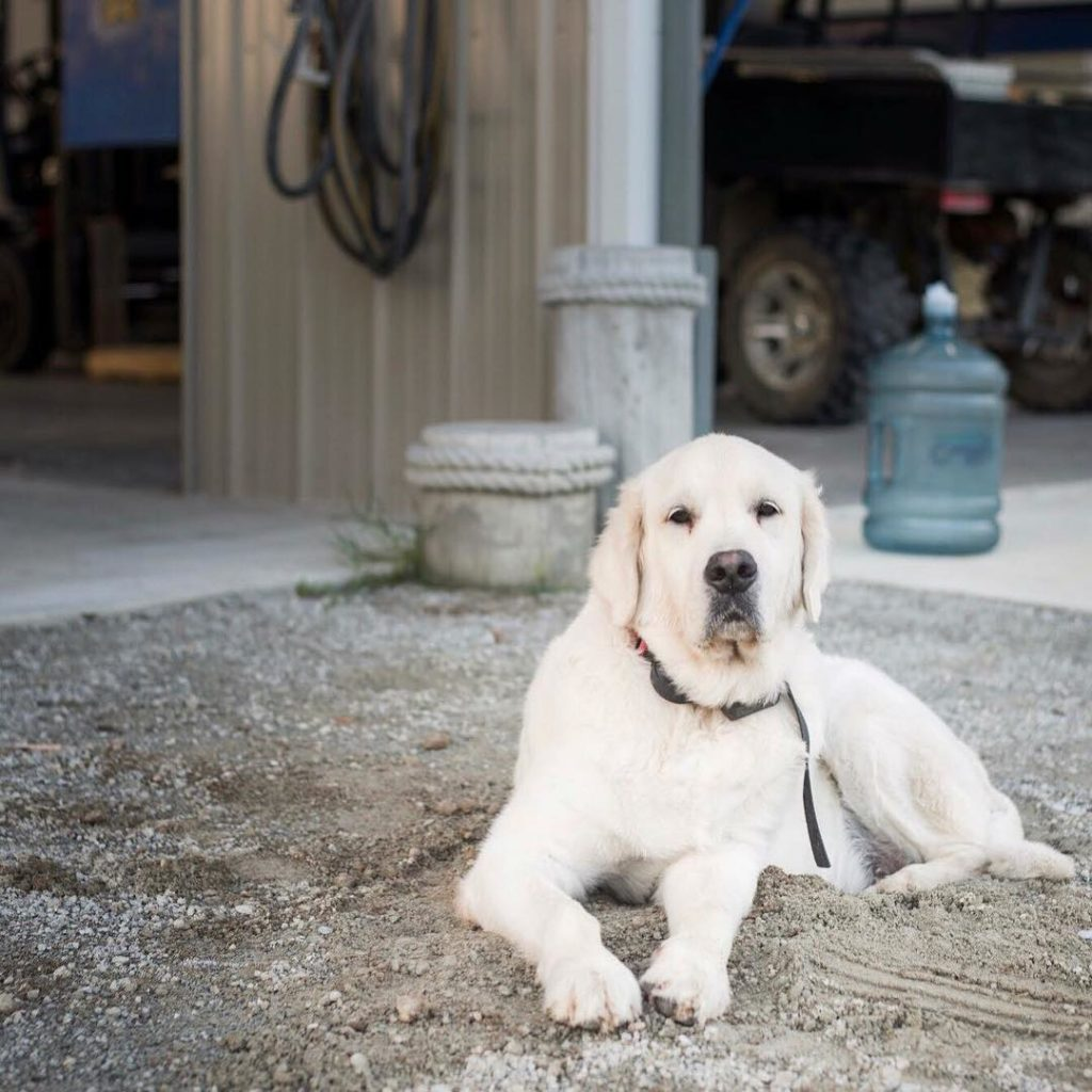 pet of the month Rudder