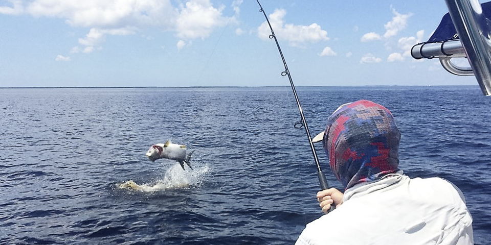 Hooking up on a Tarpon in the Neuse River.